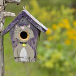 The Ultimate Guide to DIY Birdhouse Design