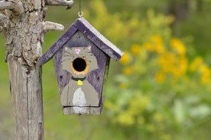 painted birdhouse, cat, wooden