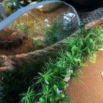 Aquarium Cabinetry: A DIY Guide to Custom Aquarium Stands