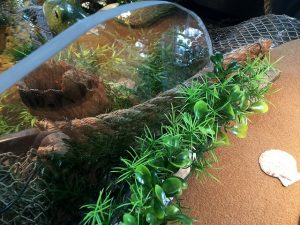 aquarium, decoration, grass