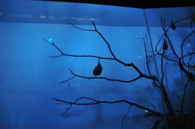 bat, tree, night, blue