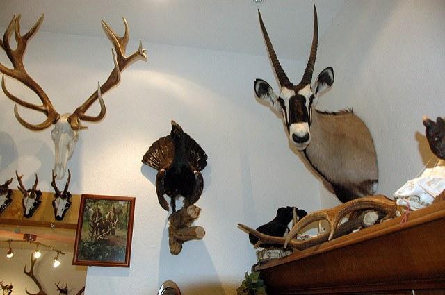 hunt, animals, animal heads