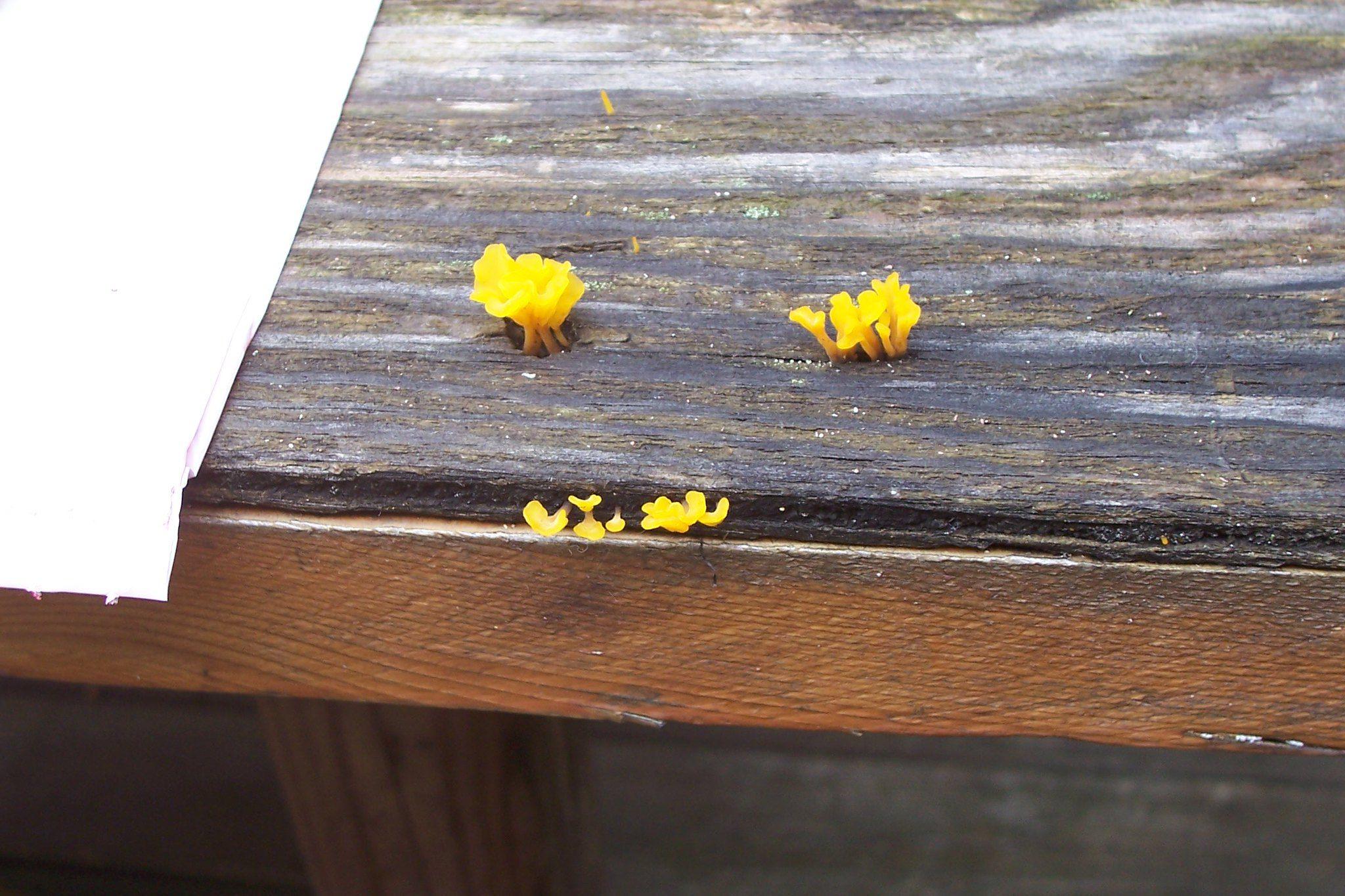 plywood, fungi